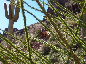 SkinnyHike on Saddle Mountain Trail (by T.Cowan)