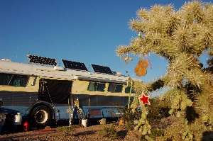 The Ajo Solstice Cholla