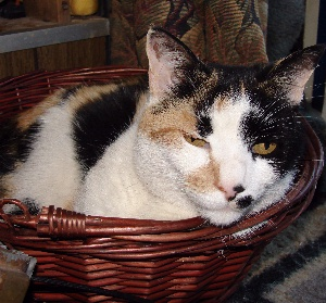 A Basket of TacocaT Doing Nothing