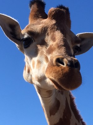 Nothing like a Quiz from a Giraffe, eh?